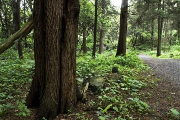 Resultado de imagen para areas naturales protegidas cdmx